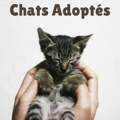 Chats adoptés - Mia House le Mans.png
